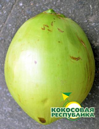 Питьевой молодой кокос. Вес 1.5 - 2 кг.